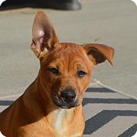 Adopt A Pet :: Bruce - Allen town, PA
