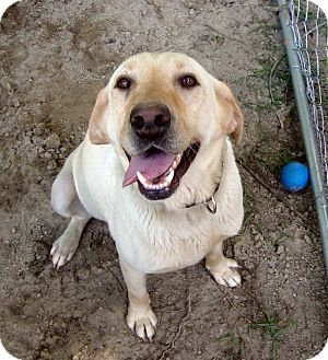 Labrador Retriever Mix Dog for adoption in Daleville, Alabama - Debbie