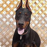 Adopt A Pet :: Franky - Fillmore, CA