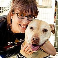Adopt A Pet :: Candy - Acton, CA