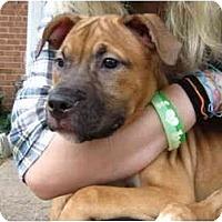 Adopt A Pet :: Dimitra - Reisterstown, MD
