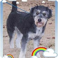 Adopt A Pet :: Mopsey - Staunton, VA