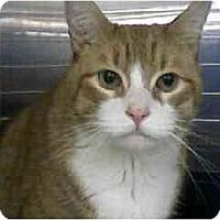 Adopt A Pet :: Vinny - Greenville, SC