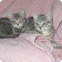 Adopt A Pet :: Emma& Gemma - CARVER, MA
