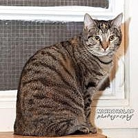 Adopt A Pet :: Violet BARN CAT HOME ONLY - Franklin, WV