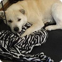 Adopt A Pet :: Blondie - Mira Loma, CA