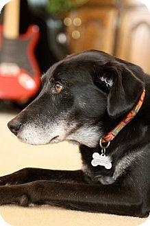 Labrador Retriever Mix Dog for adoption in Emory, Texas - Precious