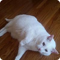 Adopt A Pet :: zz 'Buddy' courtesy post - Cincinnati, OH