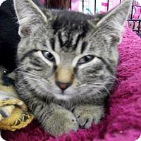 Adopt A Pet :: Harry - Castro Valley, CA
