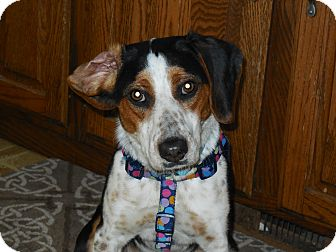 Beagle Mix Dog for adoption in Whiting, Indiana - Darling