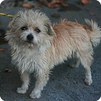 Adopt A Pet :: Danny - Canoga Park, CA