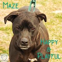 Adopt A Pet :: Maze - Washburn, MO