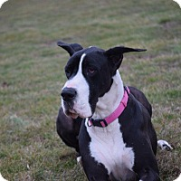 Adopt A Pet :: Idgie - COURTESY LISTING - Springfield, IL