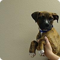 Adopt A Pet :: Clyde - Oviedo, FL