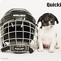 Adopt A Pet :: Quickie - Irvine, CA