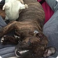 Adopt A Pet :: Kiki-ADOPTED - Livonia, MI