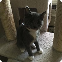 Adopt A Pet :: Kane - Jerseyville, IL