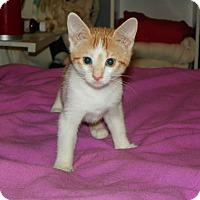 Adopt A Pet :: Briar - Whitehall, PA