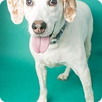 Adopt A Pet :: Elsa - Roanoke, VA