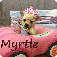 Adopt A Pet :: Myrtle - Shreveport, LA