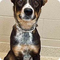 Adopt A Pet :: Tucker - Plainfield, IL