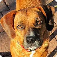 Adopt A Pet :: Sadie - Minneapolis, MN