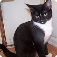 Adopt A Pet :: K-Blackberry-Minnie - Colorado Springs, CO