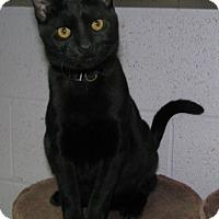 Adopt A Pet :: Quincy - New Kensington, PA
