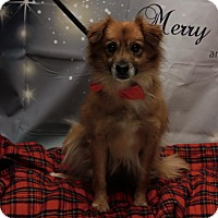 Adopt A Pet :: Nero - Twin Falls, ID