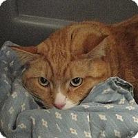 Adopt A Pet :: Leroy - Fall River, MA