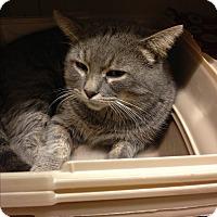 Adopt A Pet :: Merlin - Salem, NH