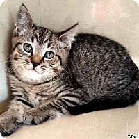 Adopt A Pet :: Jaguar - Key Largo, FL