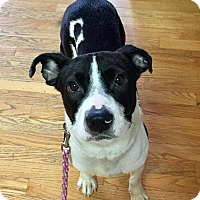 Adopt A Pet :: Oreo - Dayton, OH