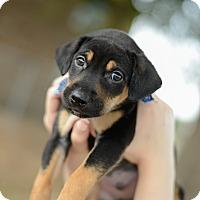 Adopt A Pet :: Todd - Muldrow, OK