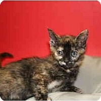 Adopt A Pet :: BARBARA - SILVER SPRING, MD