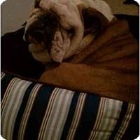 Adopt A Pet :: Mo - Gilbert, AZ
