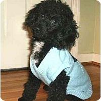 Adopt A Pet :: Jack - Mooy, AL