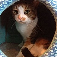 Adopt A Pet :: Abby - Byron Center, MI