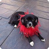 Adopt A Pet :: Gracie - Lexington, TN