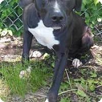 Adopt A Pet :: Savannah - Gary, IN