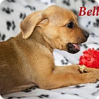 Adopt A Pet :: Belle - Weeki Wachee, FL