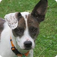 Adopt A Pet :: Baby - Cokato, MN