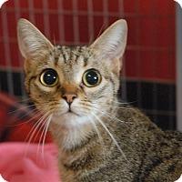 Adopt A Pet :: Baby - Winchendon, MA