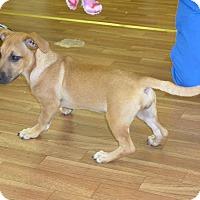 Adopt A Pet :: Goldie - Manning, SC
