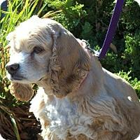 Adopt A Pet :: Faith - Parker, CO