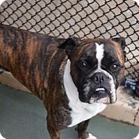 Adopt A Pet :: Piper - Brentwood, TN
