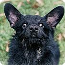 Adopt A Pet :: Lindy
