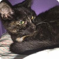 Adopt A Pet :: Lena - Medina, OH