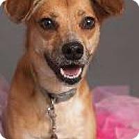 Adopt A Pet :: Luci - Louisville, KY