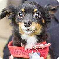 Adopt A Pet :: Minnie - Grand Rapids, MI